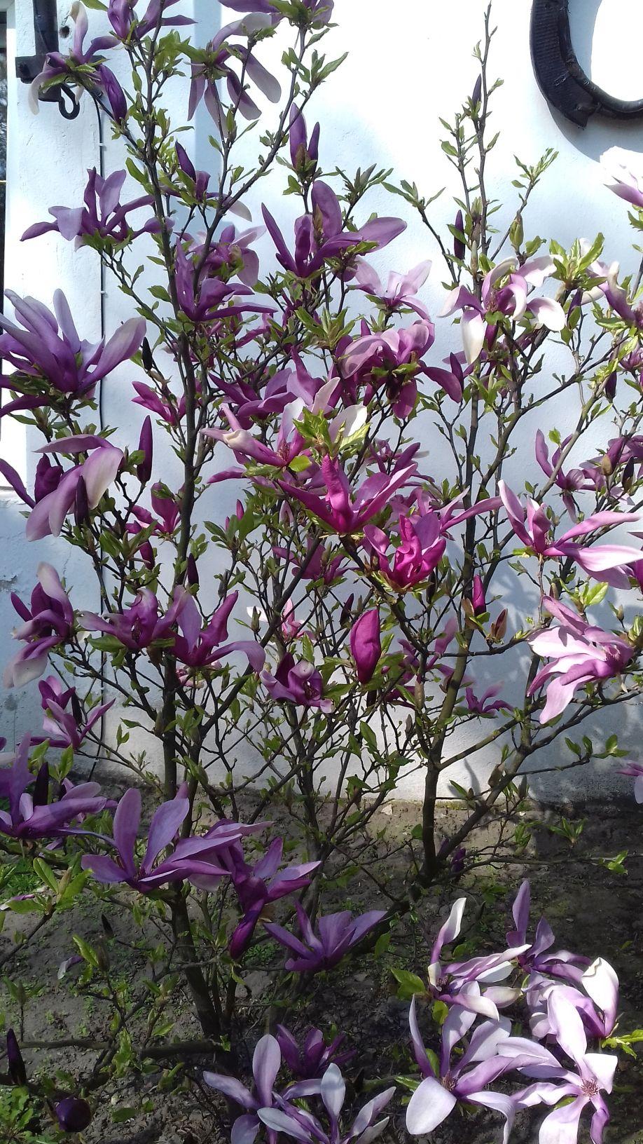 2018-04-15 Wiosna w Sochowej Zagrodzie (27)