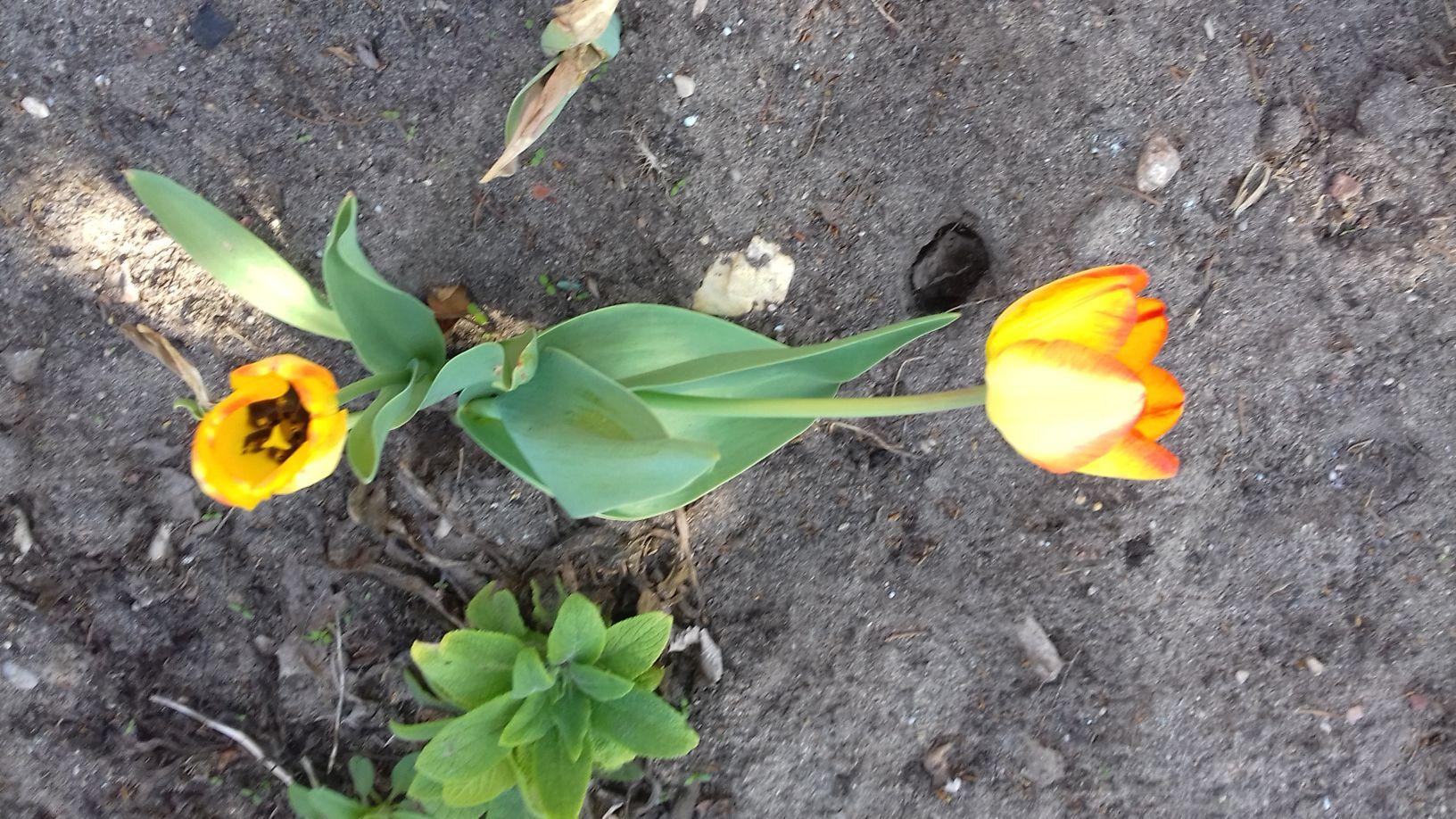 2018-04-15 Wiosna w Sochowej Zagrodzie (34)