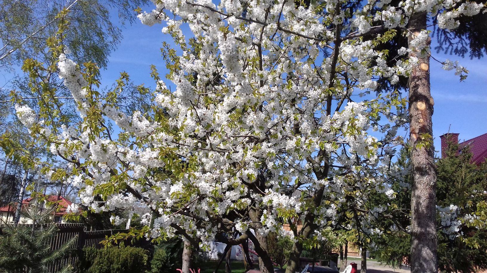 2018-04-15 Wiosna w Sochowej Zagrodzie (42)