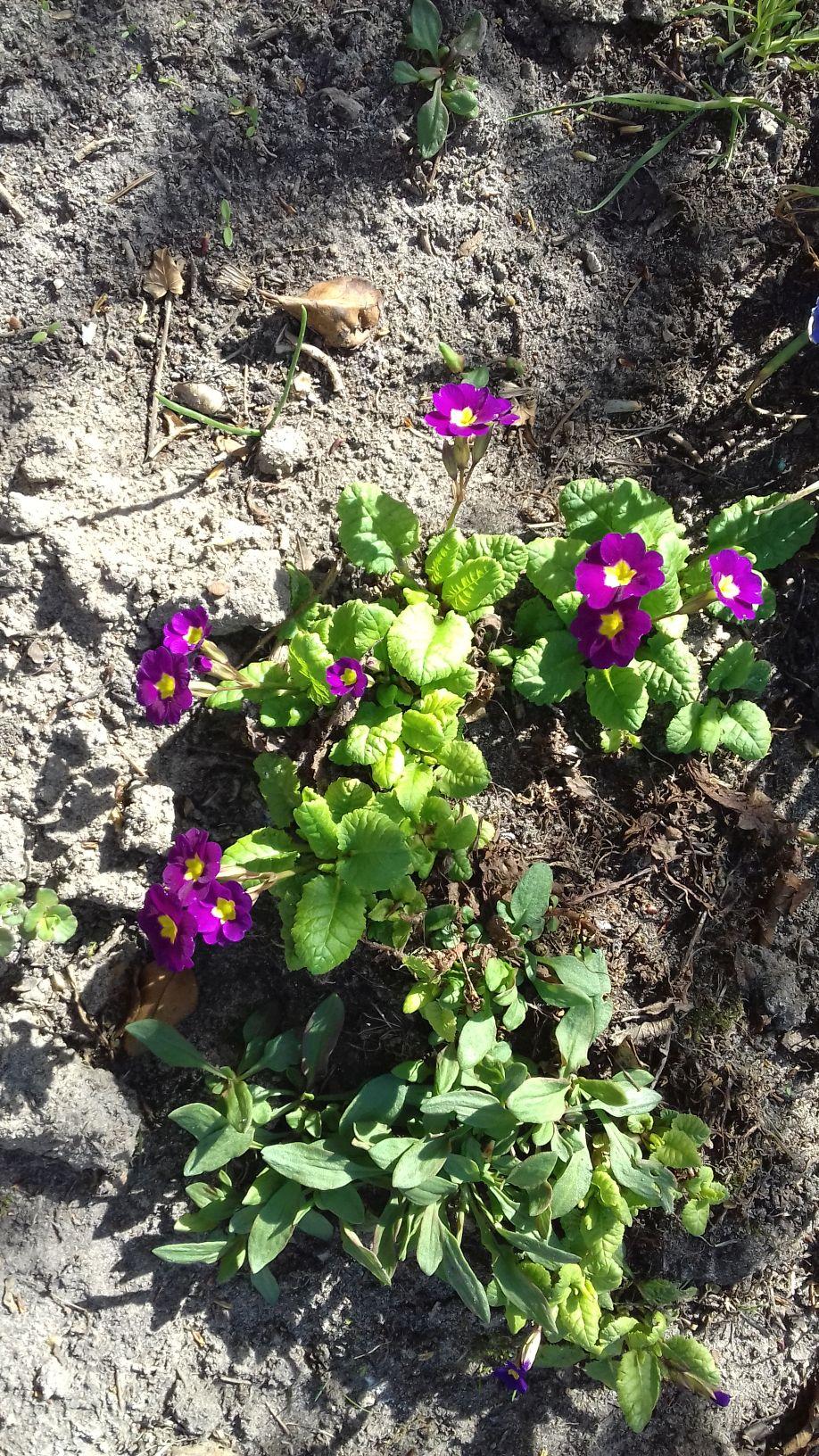 2018-04-15 Wiosna w Sochowej Zagrodzie (44)