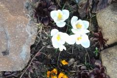 2018-04-15 Wiosna w Sochowej Zagrodzie (1)