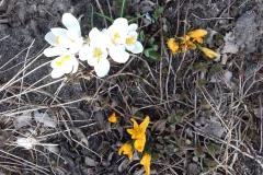 2018-04-15 Wiosna w Sochowej Zagrodzie (11)