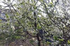 2018-04-15 Wiosna w Sochowej Zagrodzie (16)