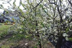 2018-04-15 Wiosna w Sochowej Zagrodzie (17)