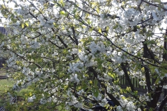 2018-04-15 Wiosna w Sochowej Zagrodzie (19)
