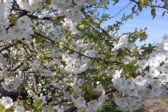 2018-04-15 Wiosna w Sochowej Zagrodzie (21)