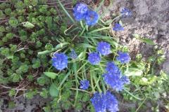 2018-04-15 Wiosna w Sochowej Zagrodzie (37)
