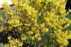 2018-04-15 Wiosna w Sochowej Zagrodzie (38)