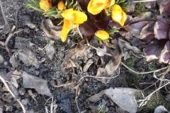 2018-04-15 Wiosna w Sochowej Zagrodzie (4)