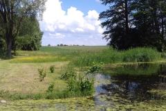 2018-06-04 Czerwiec w Sochowej Zagrodzie (1)