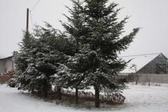 2018-12-16 Sierzchowy - zima (15)
