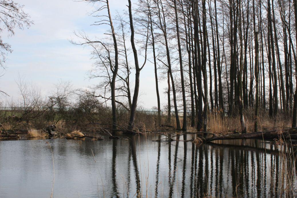 2019-03-17 Sochowa Zagroda - wiosna (45)