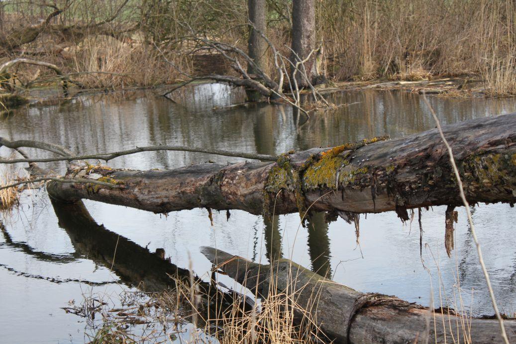2019-03-17 Sochowa Zagroda - wiosna (50)