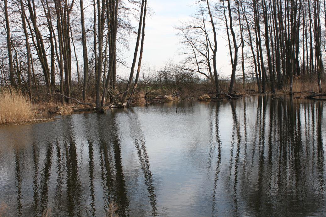 2019-03-17 Sochowa Zagroda - wiosna (57)