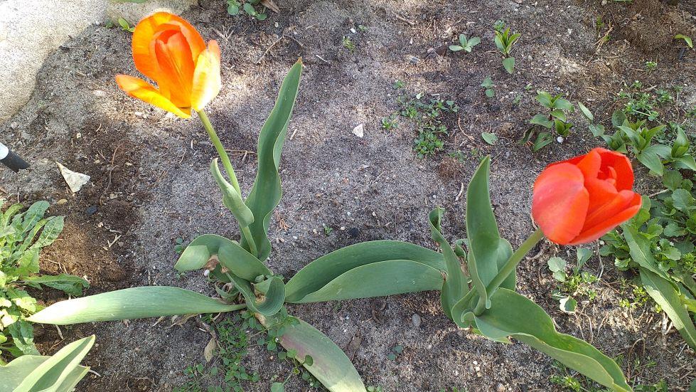 2019-04-22 Sochowa Zagroda - Wielkanoc (17)