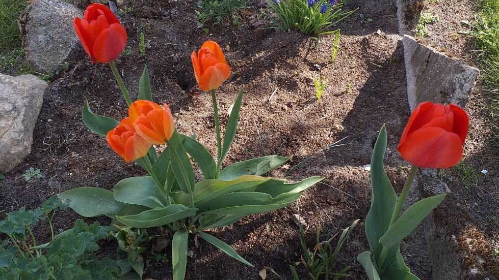 2019-04-22 Sochowa Zagroda - Wielkanoc (20)