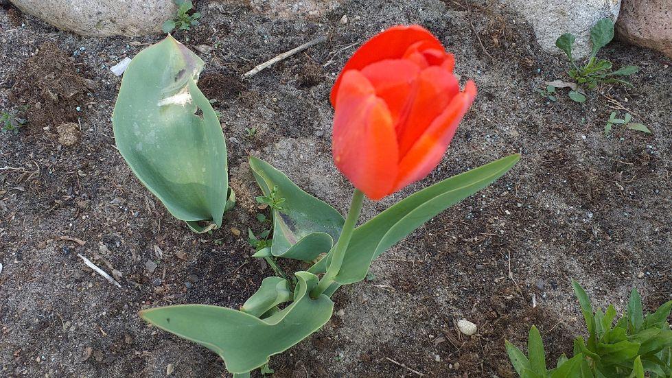 2019-04-22 Sochowa Zagroda - Wielkanoc (21)