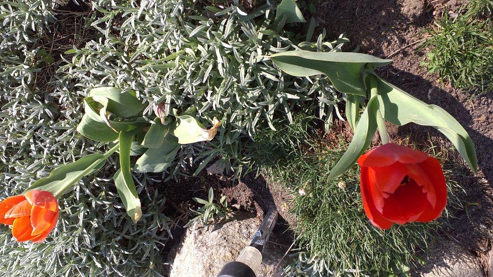 2019-04-22 Sochowa Zagroda - Wielkanoc (24)