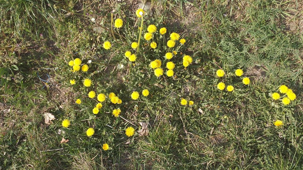 2019-04-22 Sochowa Zagroda - Wielkanoc (43)