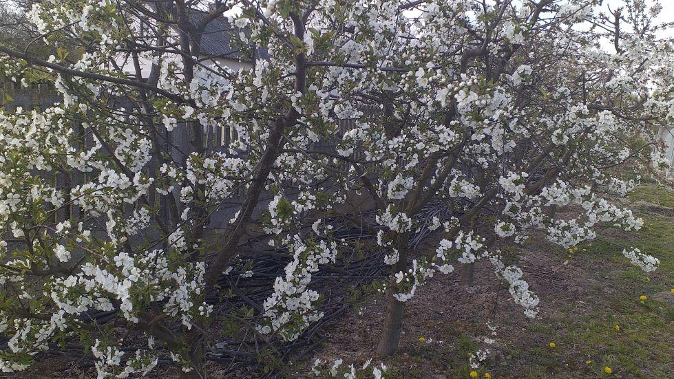 2019-04-22 Sochowa Zagroda - Wielkanoc (46)