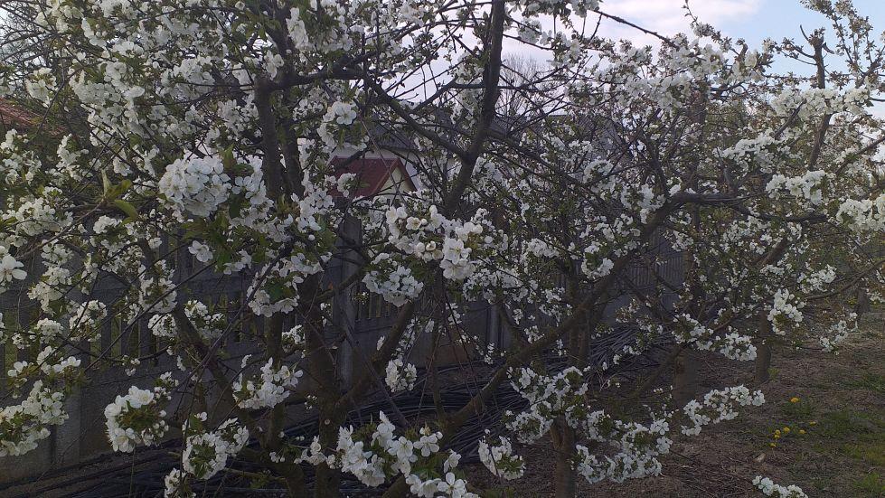 2019-04-22 Sochowa Zagroda - Wielkanoc (47)