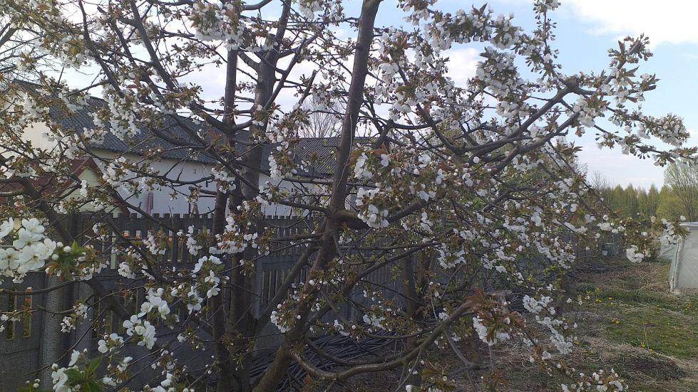 2019-04-22 Sochowa Zagroda - Wielkanoc (48)