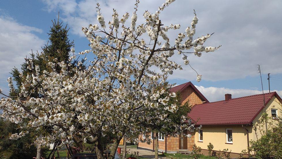 2019-04-22 Sochowa Zagroda - Wielkanoc (8)