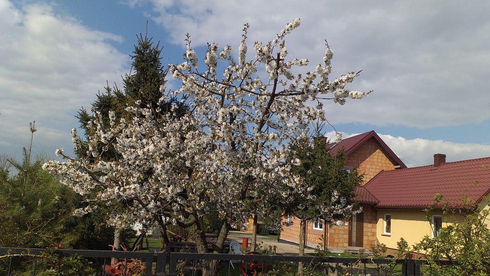 2019-04-22 Sochowa Zagroda - Wielkanoc (9)