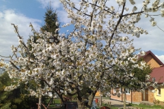 2019-04-22 Sochowa Zagroda - Wielkanoc (10)