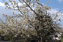 2019-04-22 Sochowa Zagroda - Wielkanoc (11)