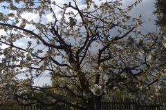 2019-04-22 Sochowa Zagroda - Wielkanoc (12)