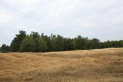 2019-07-28 Gustawów (1)