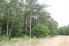 2019-07-28 Gustawów (4)