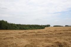 2019-07-28 Gustawów (5)