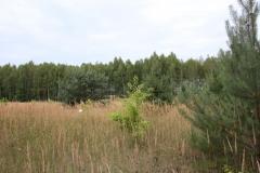 2019-07-28 Gustawów (7)
