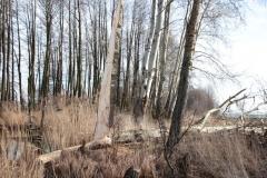 2020-02-16 Sochowa Zagroda - nad stawem (1)