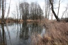 2020-02-16 Sochowa Zagroda - nad stawem (11)