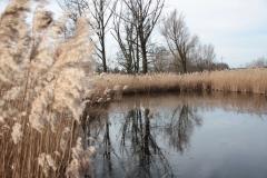2020-02-16 Sochowa Zagroda - nad stawem (13)