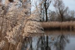 2020-02-16 Sochowa Zagroda - nad stawem (14)