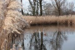 2020-02-16 Sochowa Zagroda - nad stawem (15)