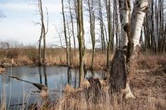 2020-02-16 Sochowa Zagroda - nad stawem (16)