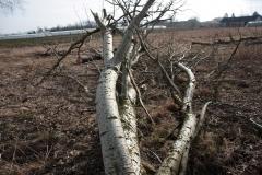 2020-02-16 Sochowa Zagroda - nad stawem (17)