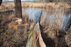 2020-02-16 Sochowa Zagroda - nad stawem (18)