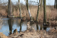 2020-02-16 Sochowa Zagroda - nad stawem (19)