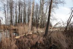 2020-02-16 Sochowa Zagroda - nad stawem (2)