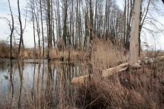 2020-02-16 Sochowa Zagroda - nad stawem (3)