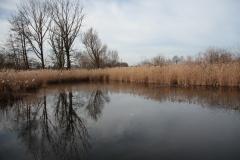 2020-02-16 Sochowa Zagroda - nad stawem (4)