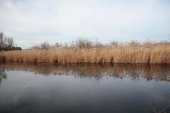 2020-02-16 Sochowa Zagroda - nad stawem (5)