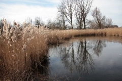 2020-02-16 Sochowa Zagroda - nad stawem (6)