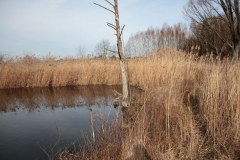 2020-02-16 Sochowa Zagroda - nad stawem (7)